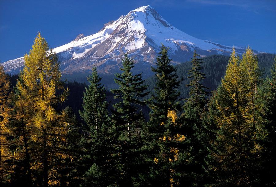 フリー写真 森の木々とフッド山の風景
