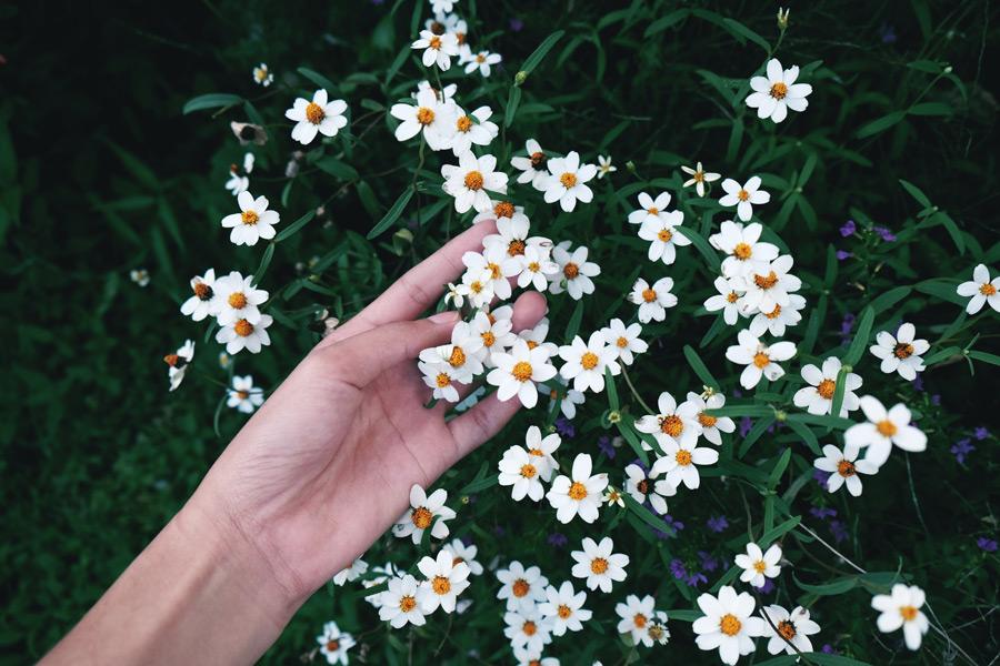 フリー写真 白色の小さな花と手