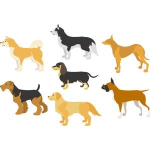 フリーイラスト, ベクター画像, AI, 動物, 哺乳類, 犬(イヌ), 柴犬(シバイヌ), シベリアン・ハスキー, ファラオ・ハウンド, ダックスフンド, ウェルシュ・テリア, ゴールデン・レトリバー, ボクサー犬