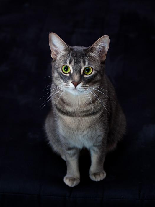 フリー写真 黒背景と猫