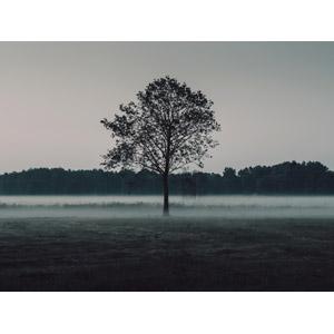 フリー写真, 風景, 牧草地, 樹木, 霧(霞)