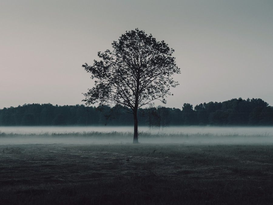 フリー写真 霧と一本の木のある風景