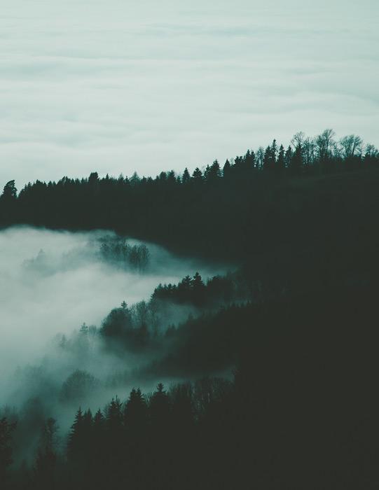 フリー写真 雲海に覆われる山の木々