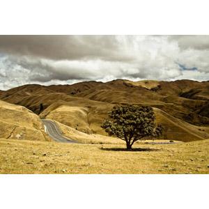 フリー写真, 風景, 丘, 樹木, 道路, ニュージーランドの風景