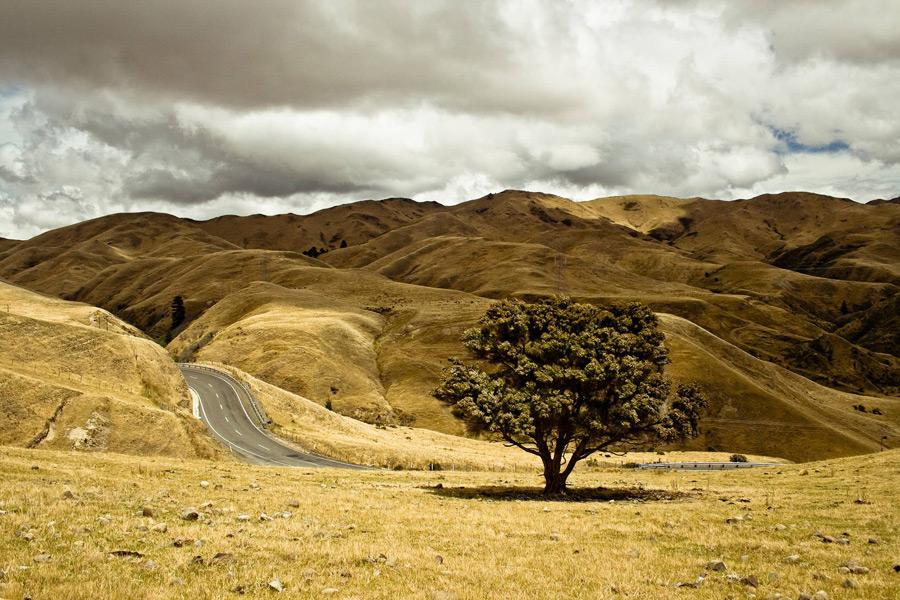 フリー写真 ニュージーランドの木と丘と道路の風景