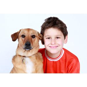 フリー写真, 人物, 子供, 男の子, 外国の男の子, アメリカ人, 人と動物, 動物, 哺乳類, 犬(イヌ), 白背景