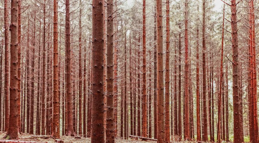 フリー写真 林の中の木々の風景