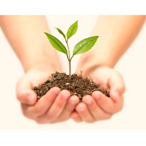 フリー写真, 人体, 手, 植物, 新芽, 土, エコロジー