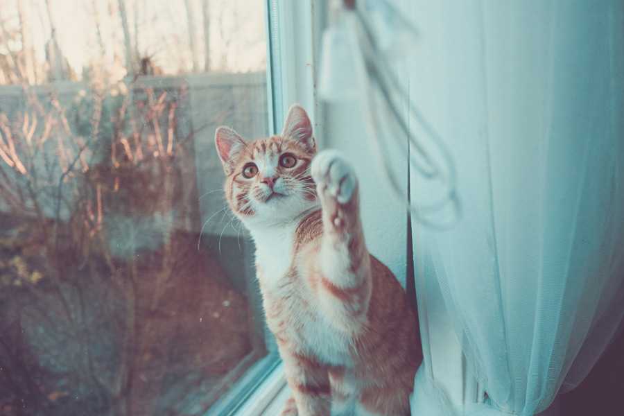 フリー写真 紐で遊んでいる猫