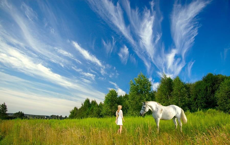 フリー写真 草むらにいる白馬と外国人女性