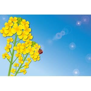 フリーイラスト, ベクター画像, AI, 風景, 自然, 青空, 春, 植物, 花, 菜の花(アブラナ), 黄色の花, 動物, 昆虫, てんとう虫(テントウムシ)