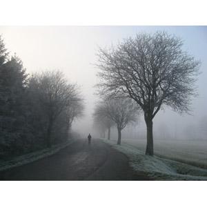 フリー写真, 風景, 小道, 田舎, 並木道, 樹木, 冬, 霧(霞), 人と風景