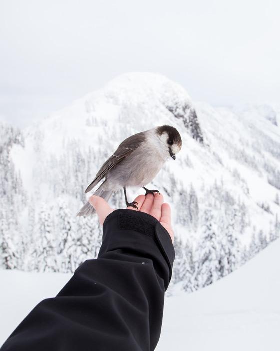 フリー写真 雪景色と手の上に乗る鳥