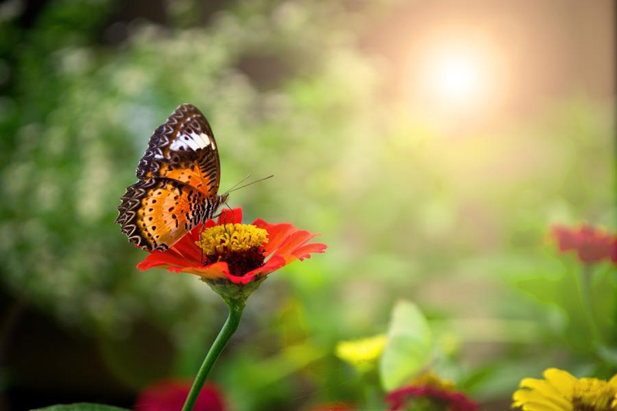 フリー写真 太陽の光と花に止まる蝶