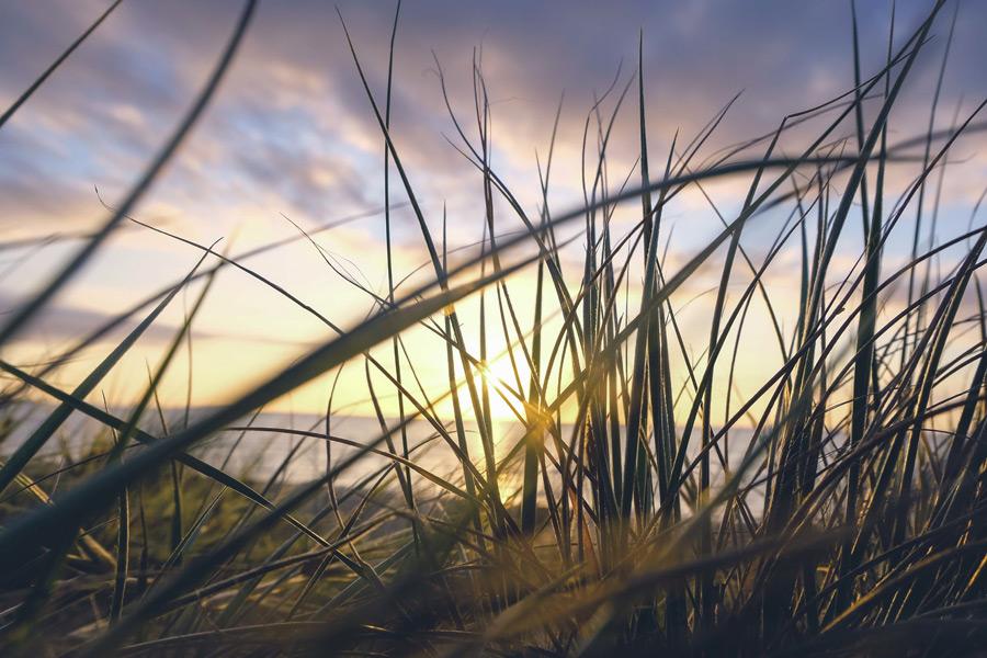 フリー写真 夕暮れの海と草の風景
