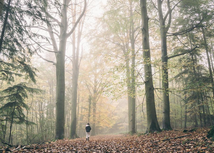 フリー写真 霧のかかる森と人のいる風景