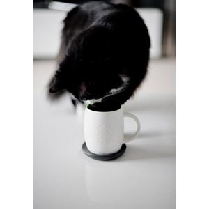 フリー写真, 動物, 哺乳類, 猫(ネコ), 白黒猫, 飲む(動物)