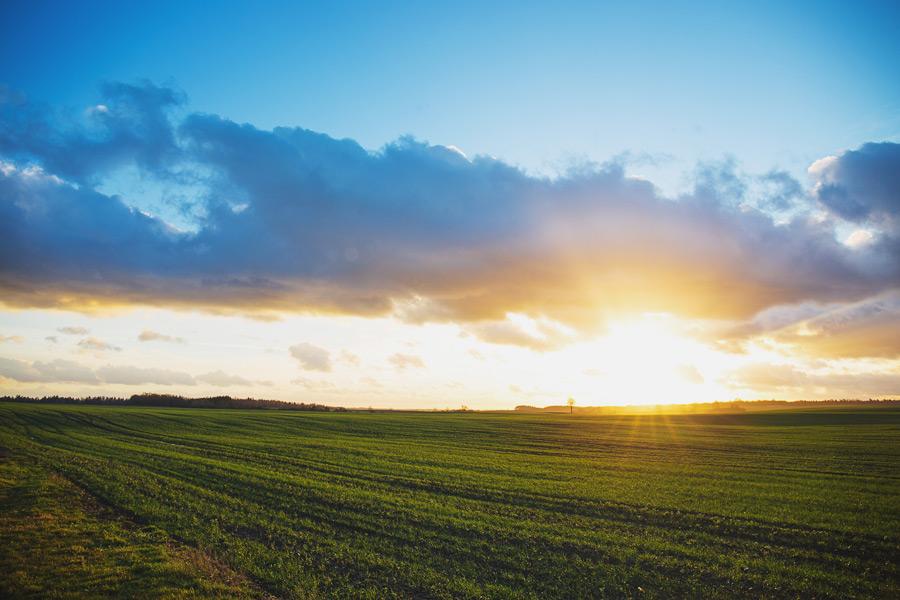 フリー写真 夕暮れの牧草地の風景