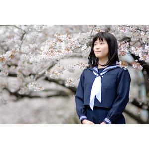 フリー写真, 人物, 少女, アジアの少女, 日本人, 少女(00048), 学生(生徒), 高校生, セーラー服(学生服), 学生服, 人と花, 桜(サクラ), 春, 見上げる(上を向く)