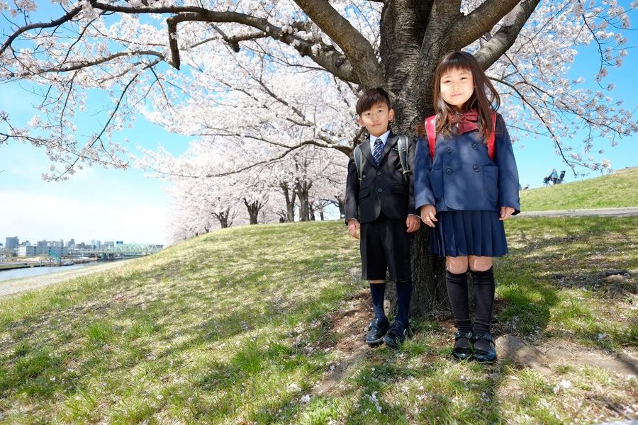 フリー写真 桜の木の下の小学生の女の子と男の子
