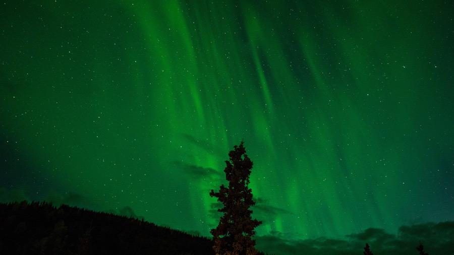 フリー写真 オーロラと木の風景
