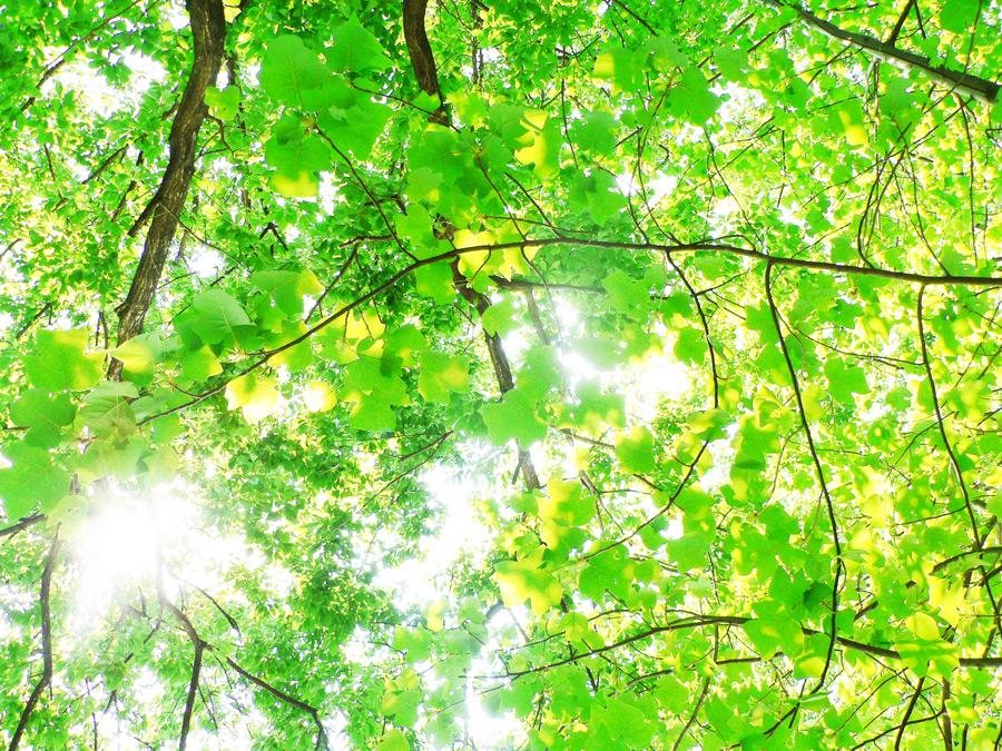 フリー写真 枝葉と木漏れ日の風景