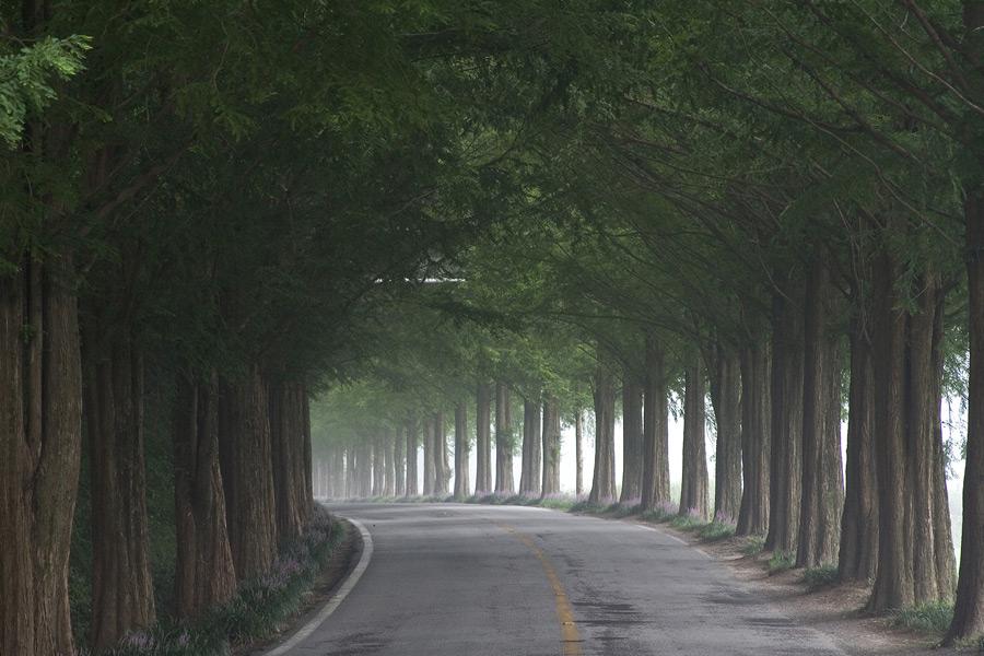フリー写真 並木道の風景