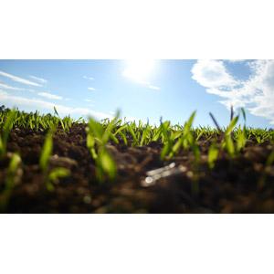 フリー写真, 風景, 畑, 青空, 新芽, 作物