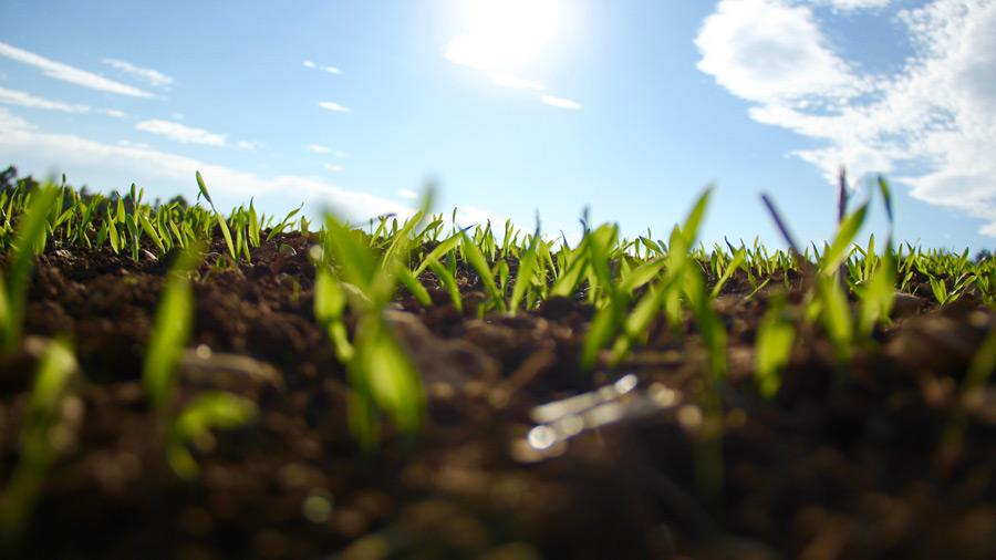 フリー写真 作物の芽が出る畑の風景