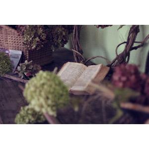 フリー写真, 本(書籍), 聖書, 植物