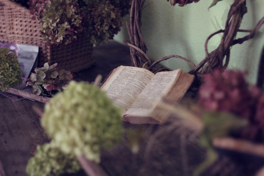 フリー写真 植物と開かれた聖書