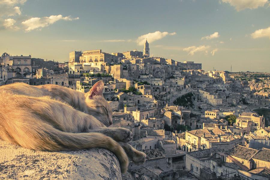 フリー写真 マテーラの旧市街と寝ている猫