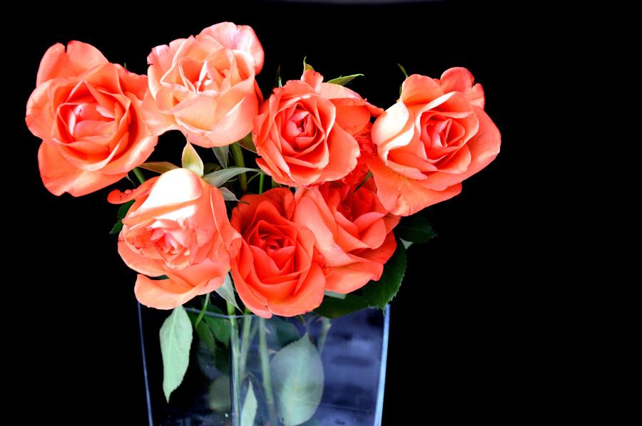 フリー写真 花瓶の中のバラの花束