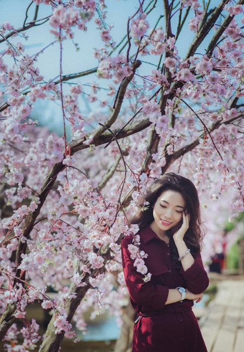 フリー写真 桜の花とベトナム人女性のポートレイト
