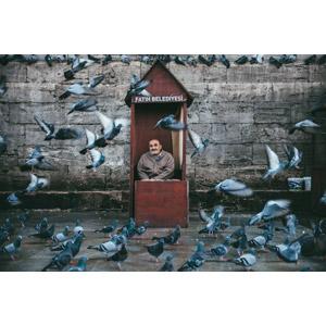 フリー写真, 人物, 老人, シニア男性, 動物, 鳥類, 鳥(トリ), 鳩(ハト), 群れ, 人と動物