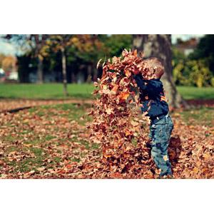 フリー写真, 人物, 子供, 男の子, 外国の男の子, 落葉(落ち葉), 植物, 葉っぱ