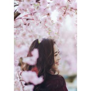 フリー写真, 人物, 女性, アジア人女性, ベトナム人, 女性(00147), 人と花, 桜(サクラ), ピンク色の花, 笑う(笑顔), 横顔