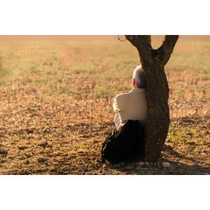 フリー写真, 人物, 老人, シニア男性, 後ろ姿, 休憩, 樹木, 座る(地面)