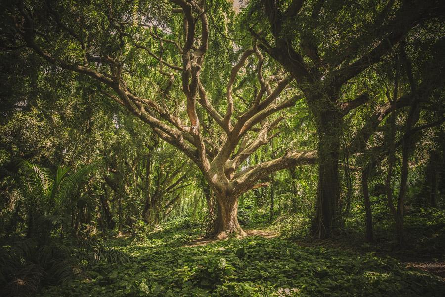 フリー写真 森の中の木の風景