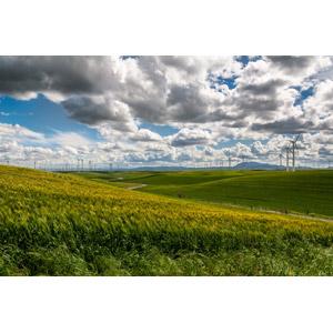 フリー写真, 風景, 畑, 麦(ムギ), 丘, 牧草地, 風力発電機, 再生可能エネルギー, 発電, 雲