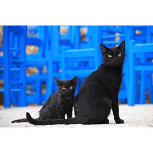 フリー写真, 動物, 哺乳類, 猫(ネコ), 子猫, 親子(動物), 子供(動物), 黒猫