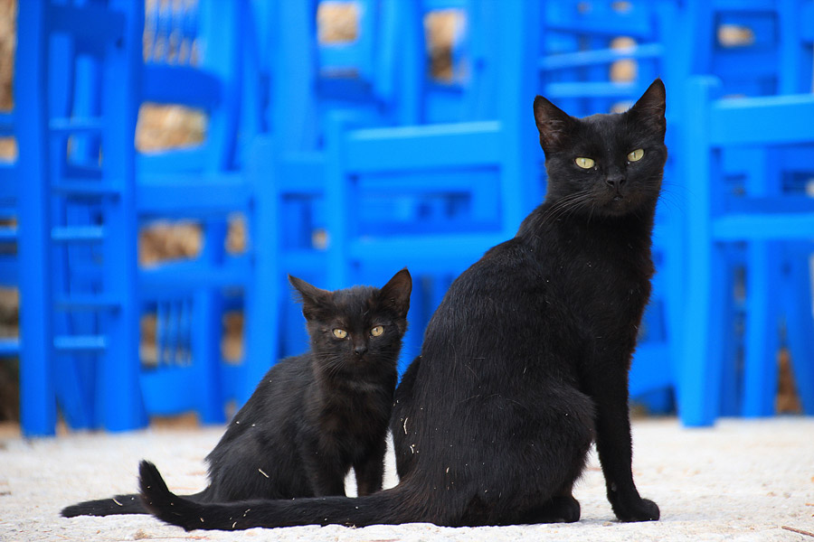 フリー写真 黒猫の親子