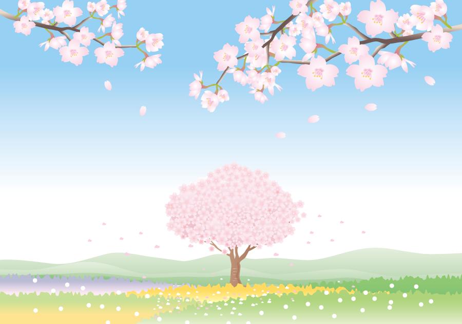 フリーイラスト 満開の桜の木と花畑