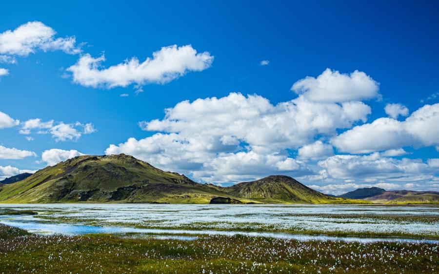 フリー写真 アイスランドの丘と花畑の風景