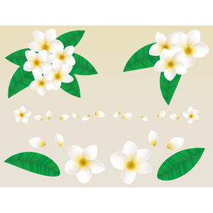 フリーイラスト, ベクター画像, AI, 植物, 花, プルメリア, 白色の花, 飾り罫線(ライン), 葉っぱ, 花びら