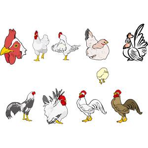 フリーイラスト, ベクター画像, AI, 動物, 鳥類, 鳥(トリ), ひよこ(ヒヨコ), 鶏(ニワトリ), 酉年