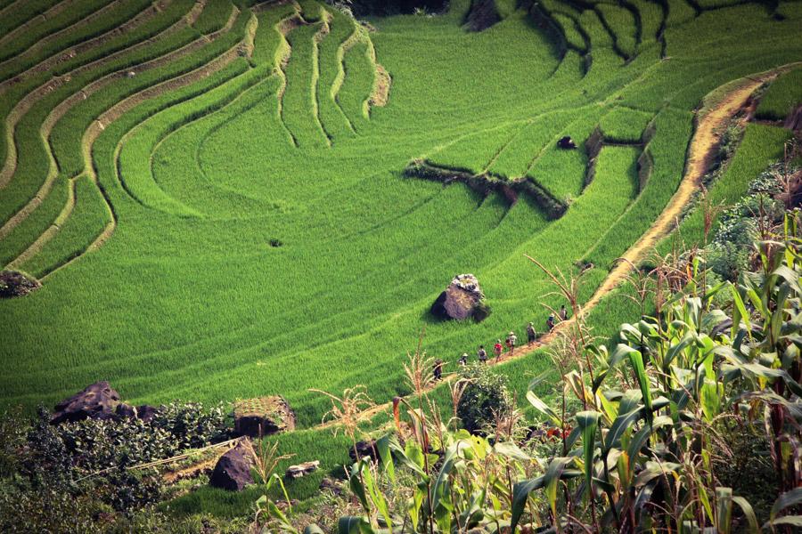 フリー写真 ベトナムのサパの棚田の風景