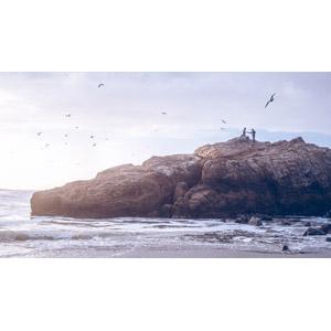 フリー写真, 人物, カップル, 恋人, 人と風景, 海岸, 岩, 鴎(カモメ), 手をつなぐ
