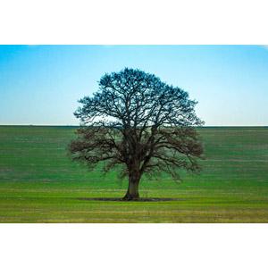 フリー写真, 風景, 牧草地, 樹木