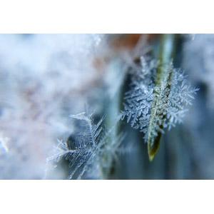 フリー写真, 雪, 雪の結晶, 氷, 氷晶, 冬